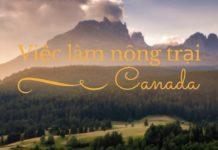 Lâm nghiệp Canada định cư